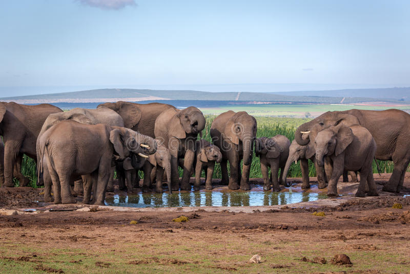 Fauna selvatica nel Sudafrica fotografia stock libera da diritti