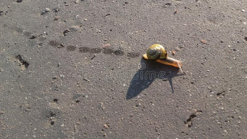 Fauna, Snail, Snails And Slugs, Organism royalty free stock photography