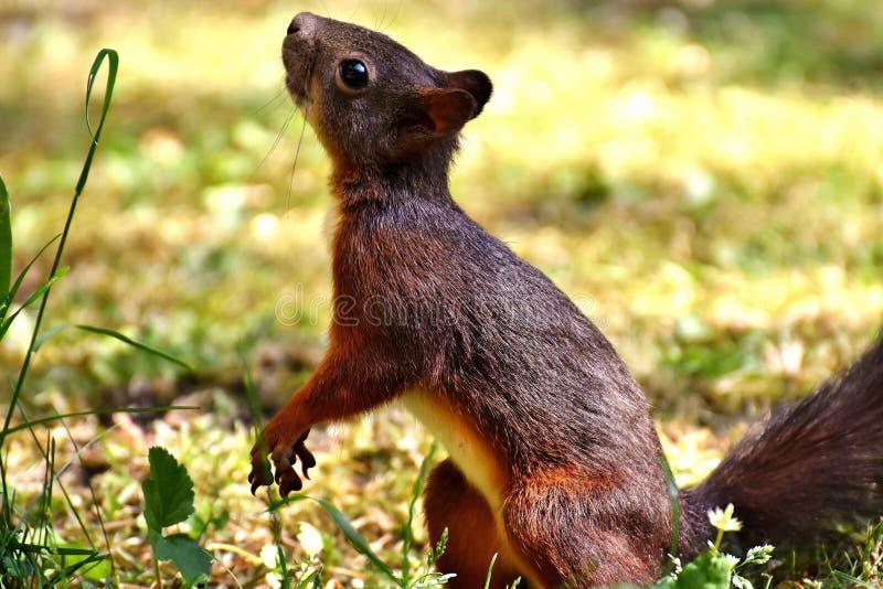 Fauna, Terrestrial Animal, Mammal, Wildlife stock photos