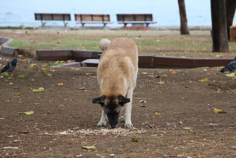 Fauna, Wildlife, Dog Breed Group, Street Dog Free Public Domain Cc0 Image