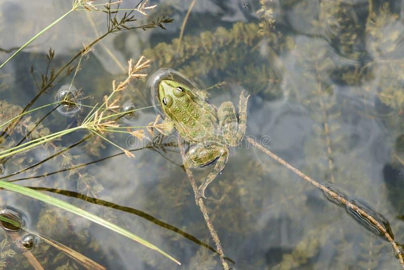 Fauna, Wildlife, Flora, Grass Family Free Public Domain Cc0 Image