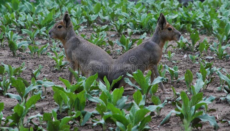 Fauna, Wildlife, Mammal, Terrestrial Animal stock photo