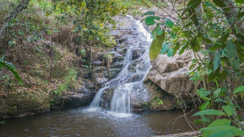 Faune et nature chez Lavras, Brésil photos stock