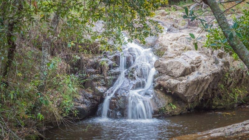 Faune et nature chez Lavras, Brésil photo stock