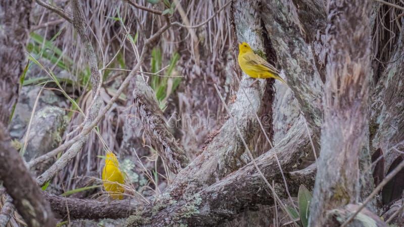 Faune et nature chez Lavras, Brésil image libre de droits