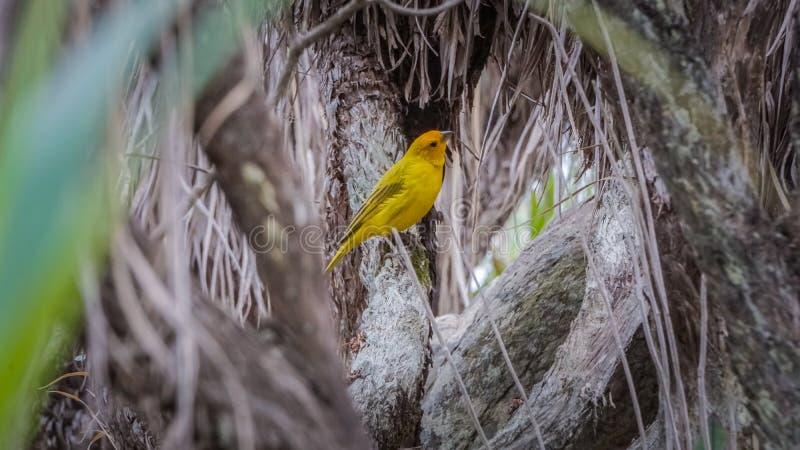 Faune et nature chez Lavras, Brésil photos libres de droits