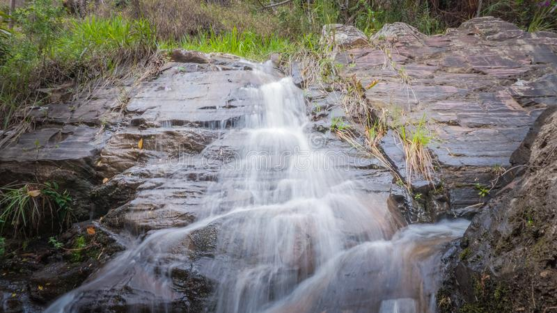 Faune et nature chez Lavras, Brésil images stock