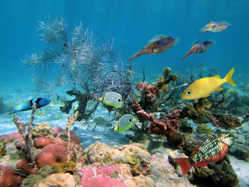 Faune sous-marine photo libre de droits