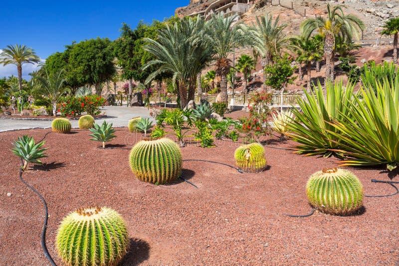 Faune tropicale d'île de Canaria de mamie photo libre de droits