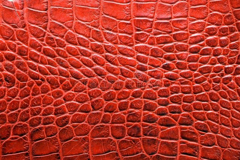 Faux aligatora skóra w czerwonego koloru brzmienia zakończeniu up zdjęcia stock