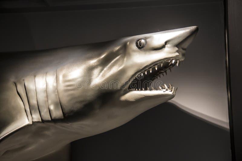 Faux requin au musée de Harvard de l'histoire naturelle, Boston, le Massachusetts photo stock