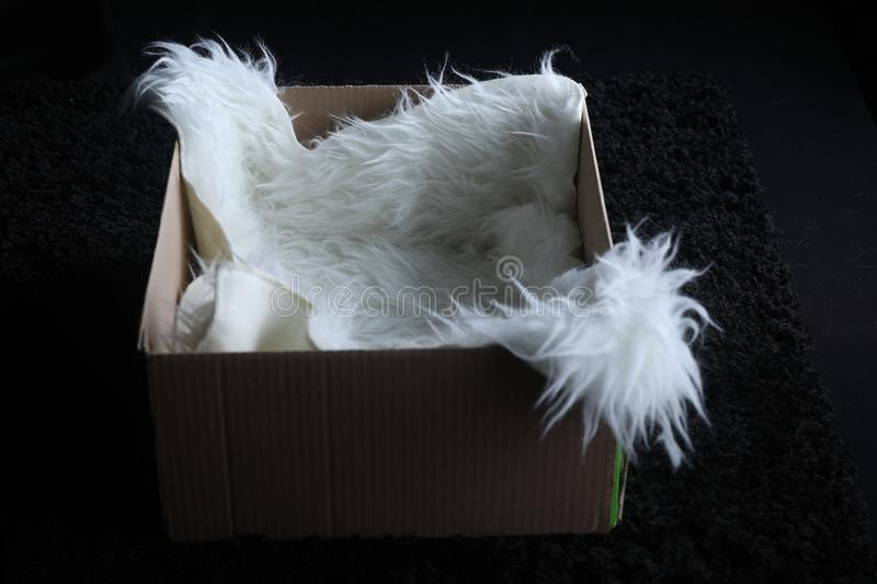Faux sheepskin rug in a box. Black background, photography prop stock images
