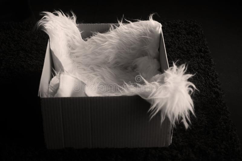 Faux sheepskin rug in a box. Black background, photography prop royalty free stock photo