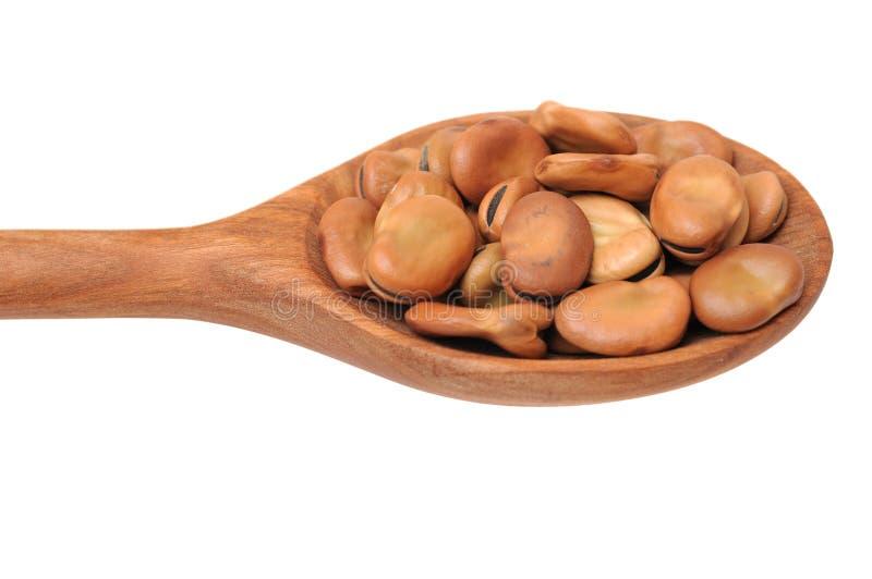 Fava Bean lizenzfreies stockfoto