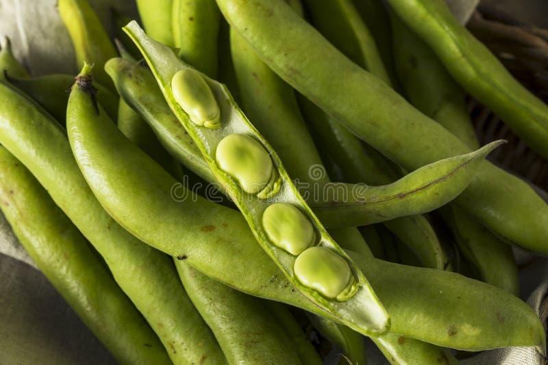 Fava Beans verte fraîche organique crue images libres de droits