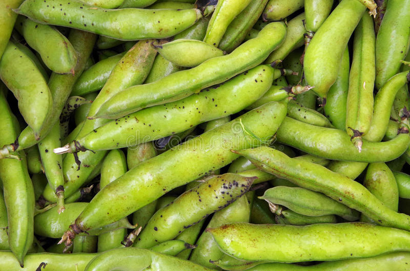 Favas foto de stock royalty free