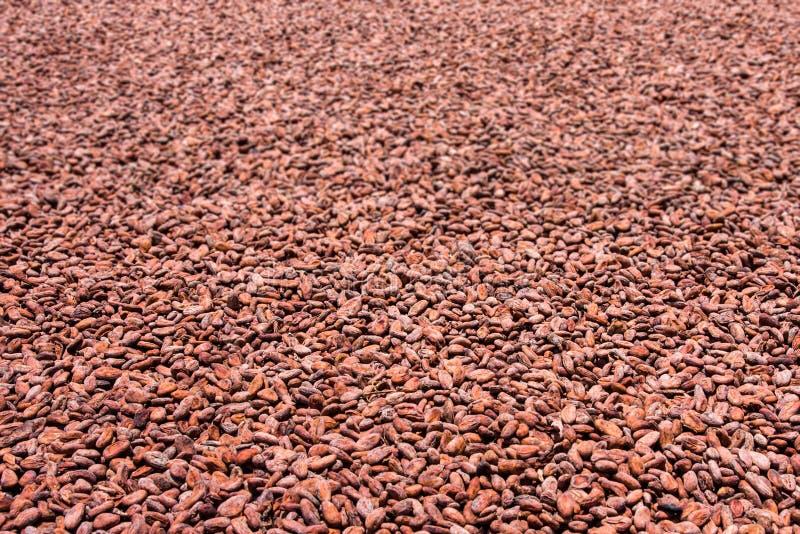 Fave di cacao immagine stock
