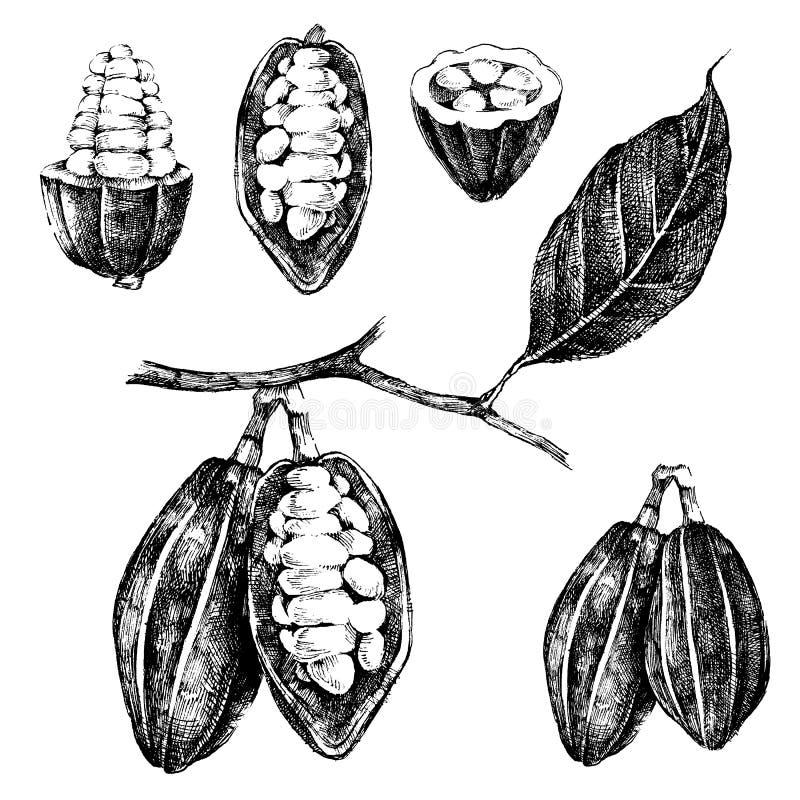 Fave di cacao disegnate a mano messe illustrazione vettoriale