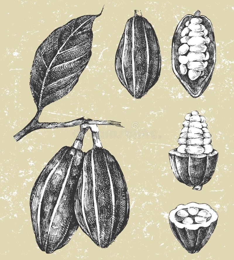 Fave di cacao disegnate a mano messe royalty illustrazione gratis