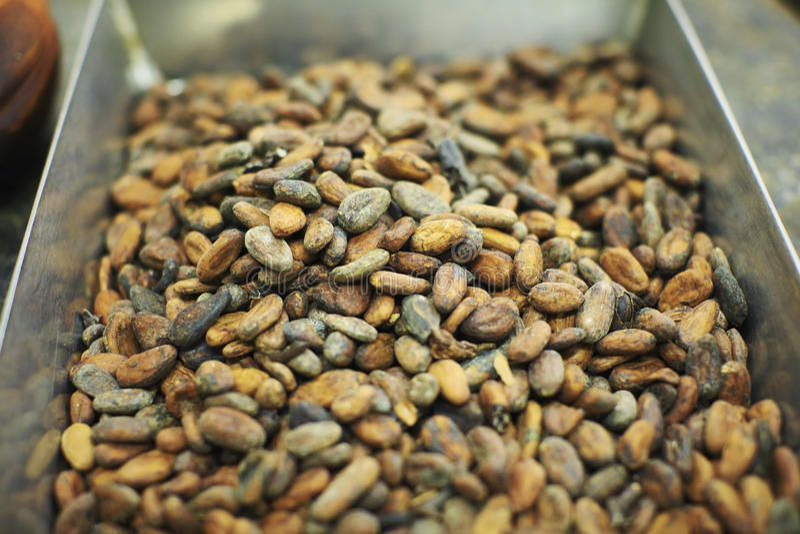 Fave di cacao grezze fotografia stock