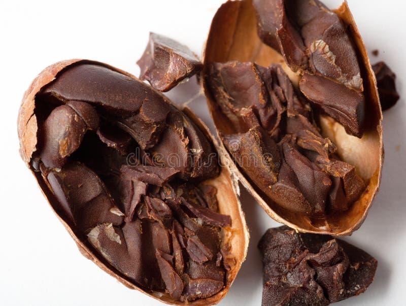 Fave di cacao grezze fotografia stock libera da diritti