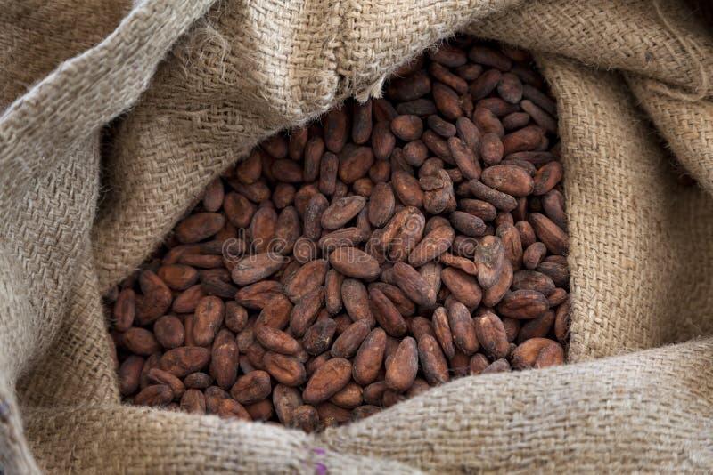 Fave di cacao in una borsa della iuta immagine stock libera da diritti