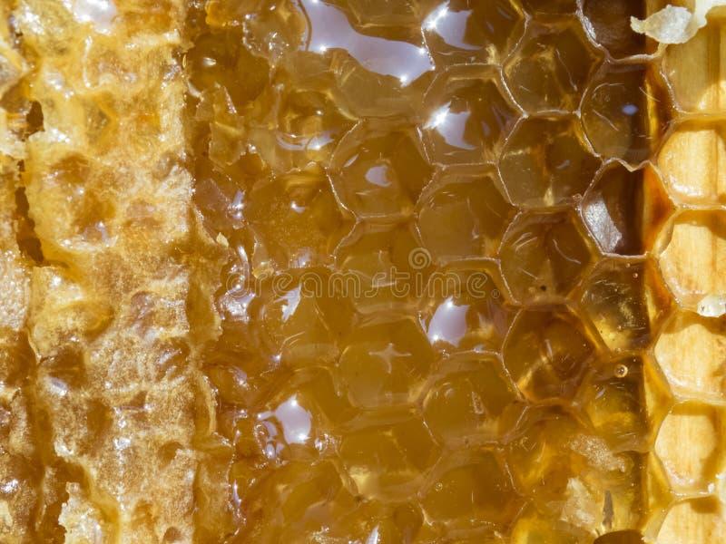 Favo con miele, primo piano, macro fotografia stock