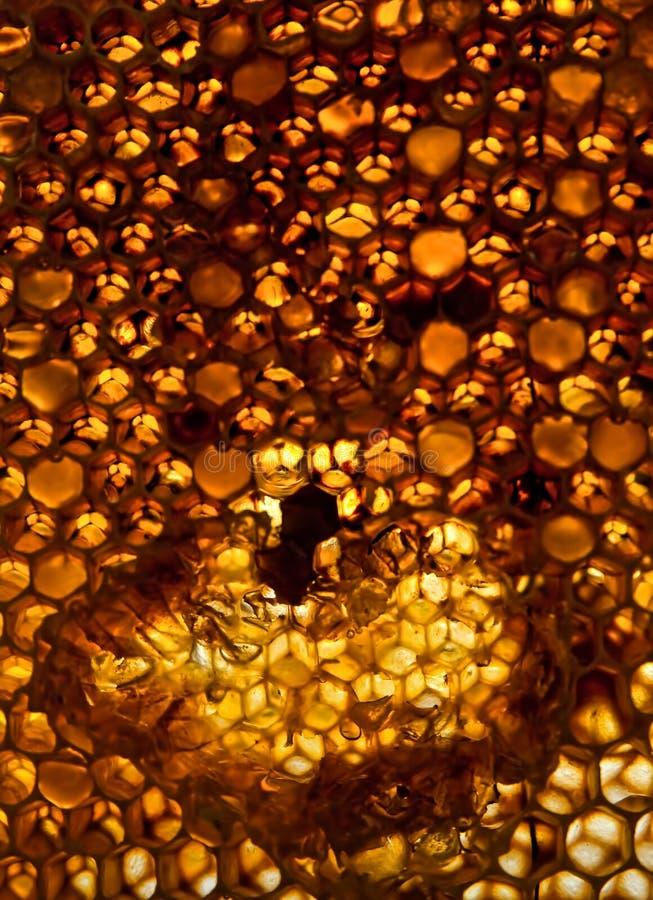 Favo de mel amarelo brilhante foto de stock