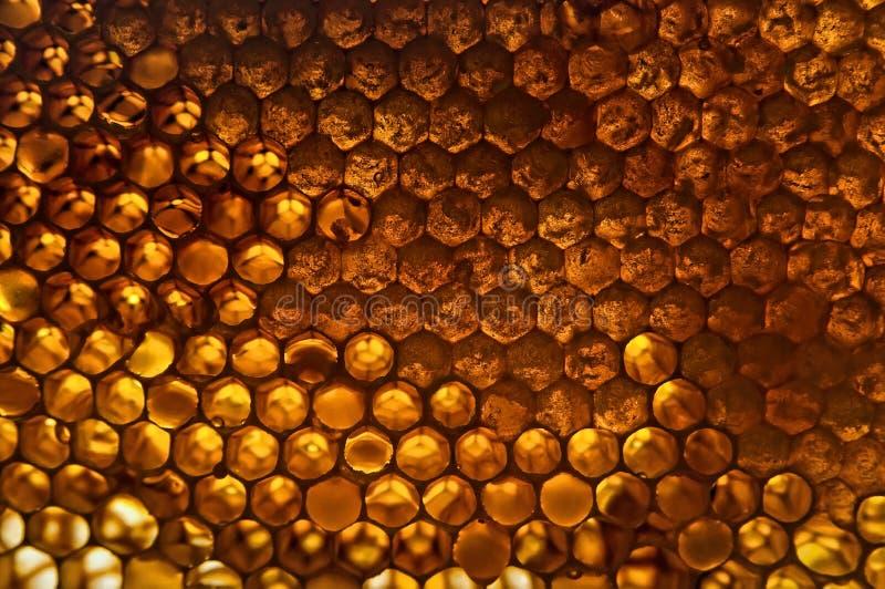 Favo de mel amarelo brilhante imagem de stock royalty free