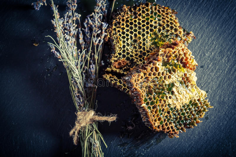 Favo de mel com mel e alfazema fotos de stock royalty free