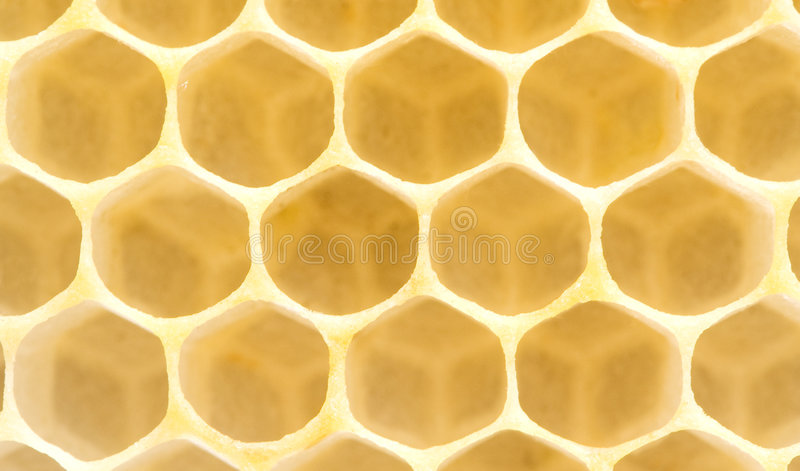 Favo de mel. Extremamente close-up foto de stock royalty free