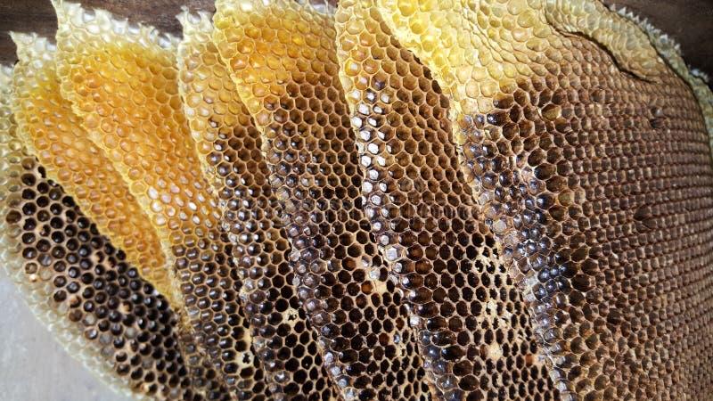 Favo de mel velho do close-up imagem de stock