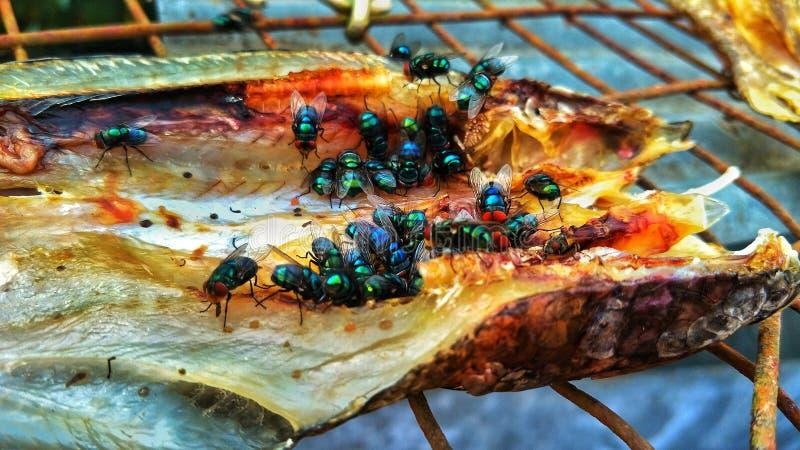 Favorit- fisk Fly' s-mat arkivfoto