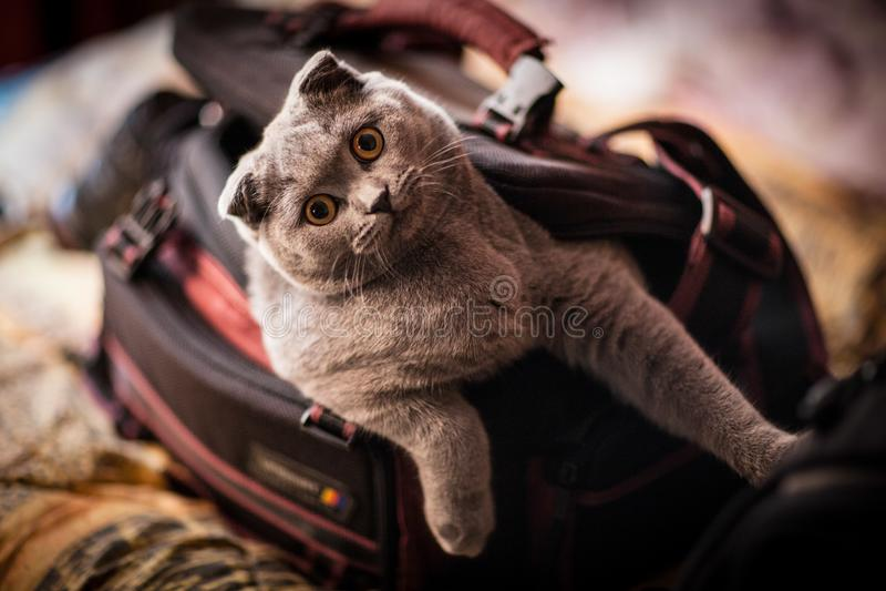 Favorite cat photographer. royalty free stock photos