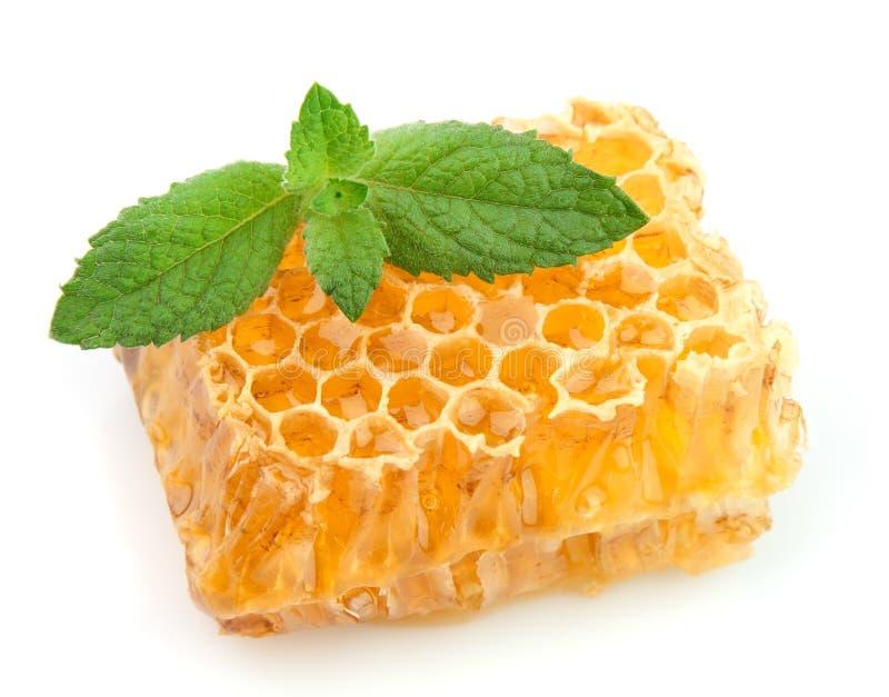 Favos de mel do mel com hortelã fotografia de stock royalty free