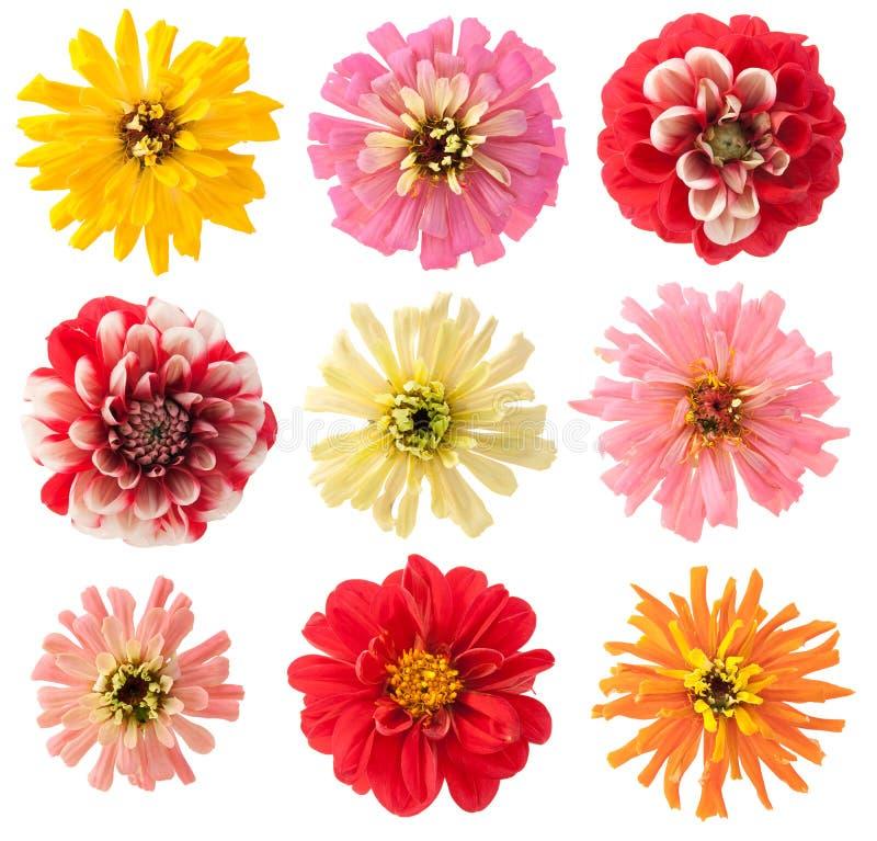Favourite garden flowers set royalty free stock photos