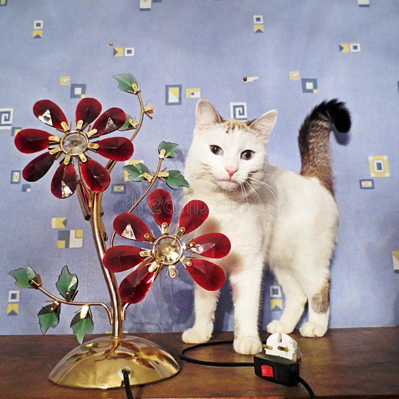 A favourite pet. A cat on the wardrobe turns on the lamp stock images