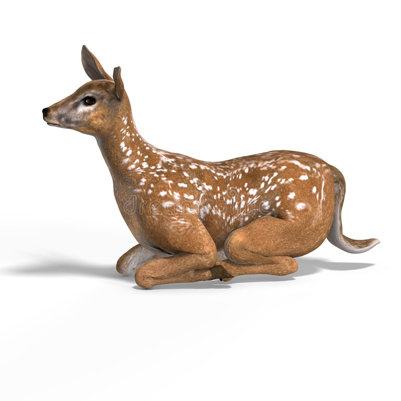 Fawn. Young doe or fawn With Clipping Path and shadow vector illustration