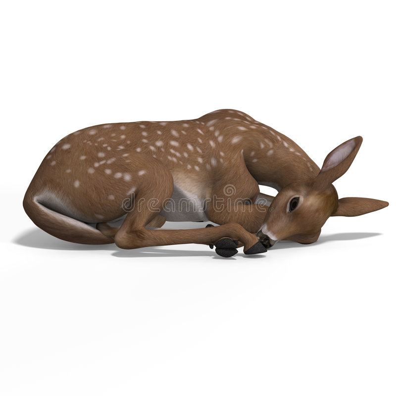 Fawn. Young doe or fawn With Clipping Path and shadow stock illustration