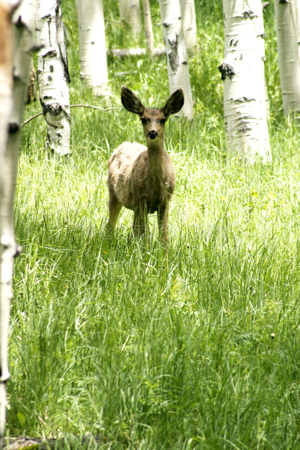 Download Fawn in forrest stock photo. Image of tree, deer, bark - 304886