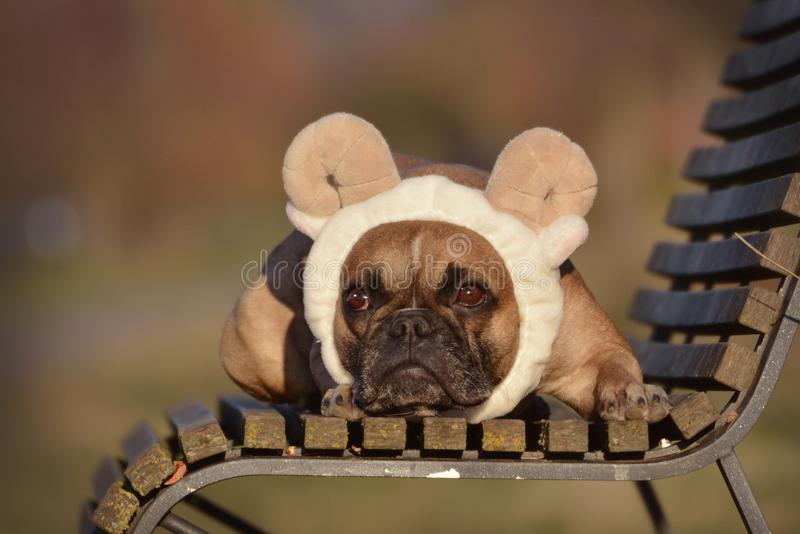 Fawn French Bulldog-hond met van schapenoren en hoornen hoofdbandkostuum die op een bank liggen stock afbeeldingen