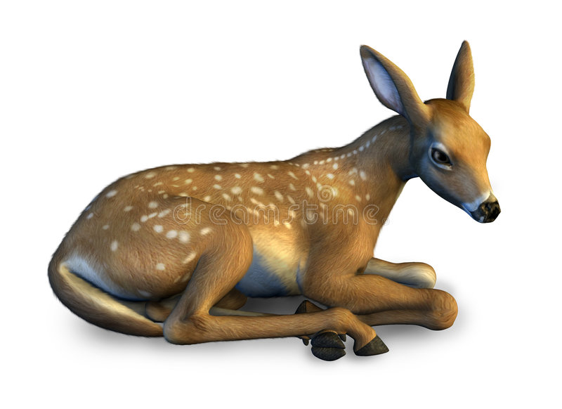 Download Fawn Resting - Includes Clipping Path Stock Illustration - Illustration of relaxed, young: 170555