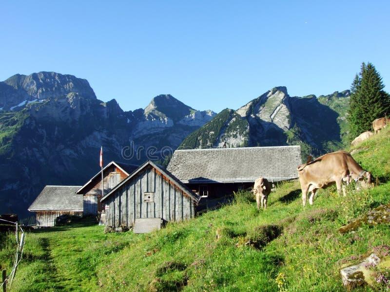 Fazendas tradicionais rurais da arquitetura e da cria??o nas inclina??es da cordilheira de Alviergruppe imagens de stock
