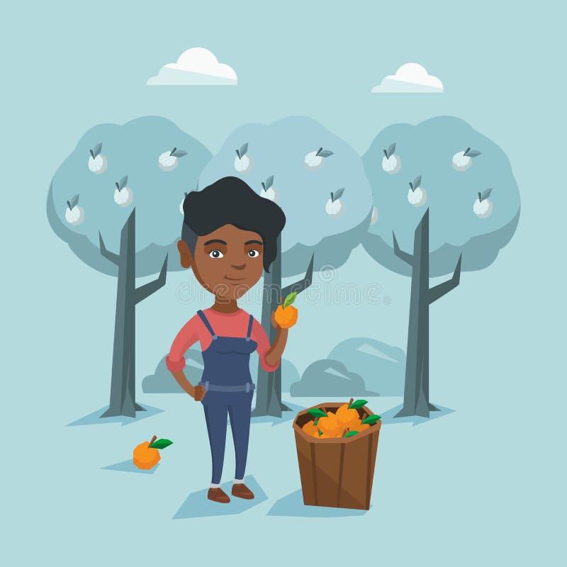Fazendeiro afro-americano novo que recolhe laranjas ilustração stock