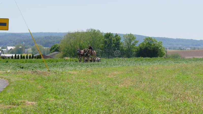 Fazendeiro Amish Harvesting His Crop com 4 cavalos e equipamento moderno imagem de stock royalty free
