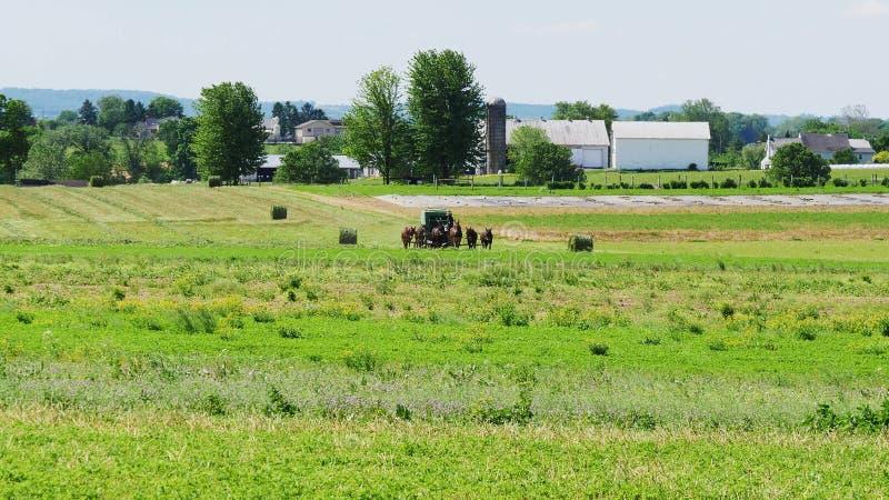 Fazendeiro Amish Harvesting His Crop com 4 cavalos e equipamento moderno fotografia de stock royalty free