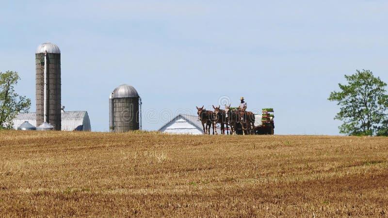 Fazendeiro Amish Harvesting His Crop com 4 cavalos e equipamento moderno fotos de stock royalty free
