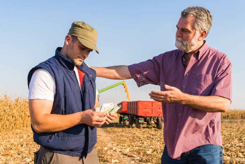 Fazendeiro após a colheita do milho imagens de stock