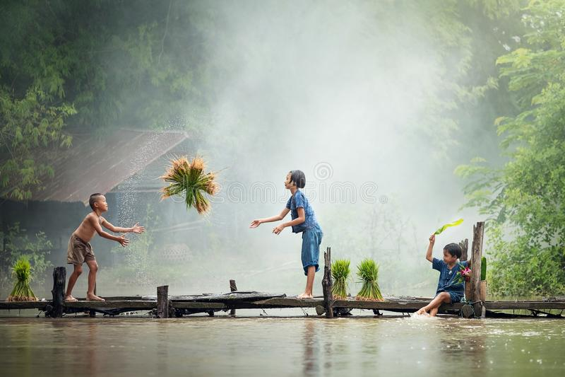 Fazendeiro asiático das crianças na cruz do arroz a ponte de madeira antes do g imagem de stock