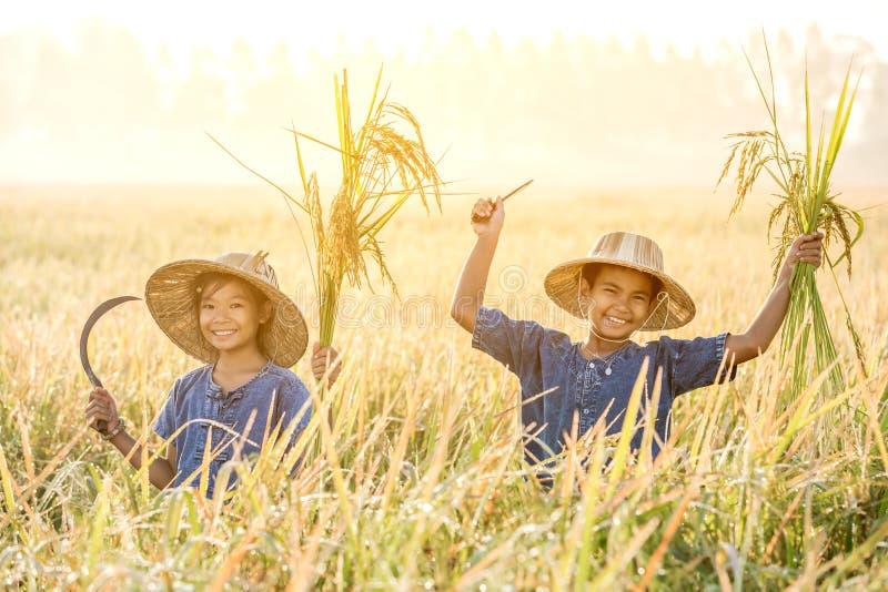 Fazendeiro asiático das crianças no campo amarelo do arroz fotografia de stock